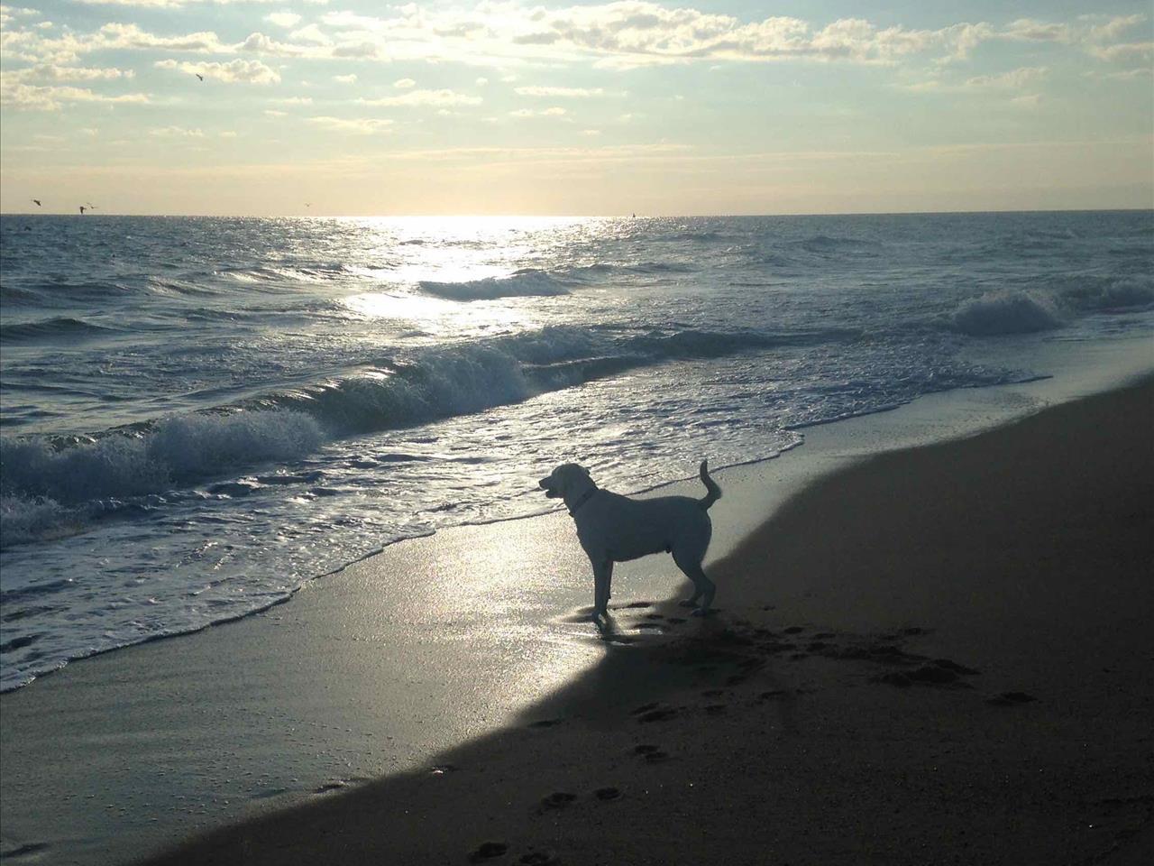 October 2015 Stay - KD13 - Surfin Gypsy (Formerly Pelican Cay), Bari Nixon