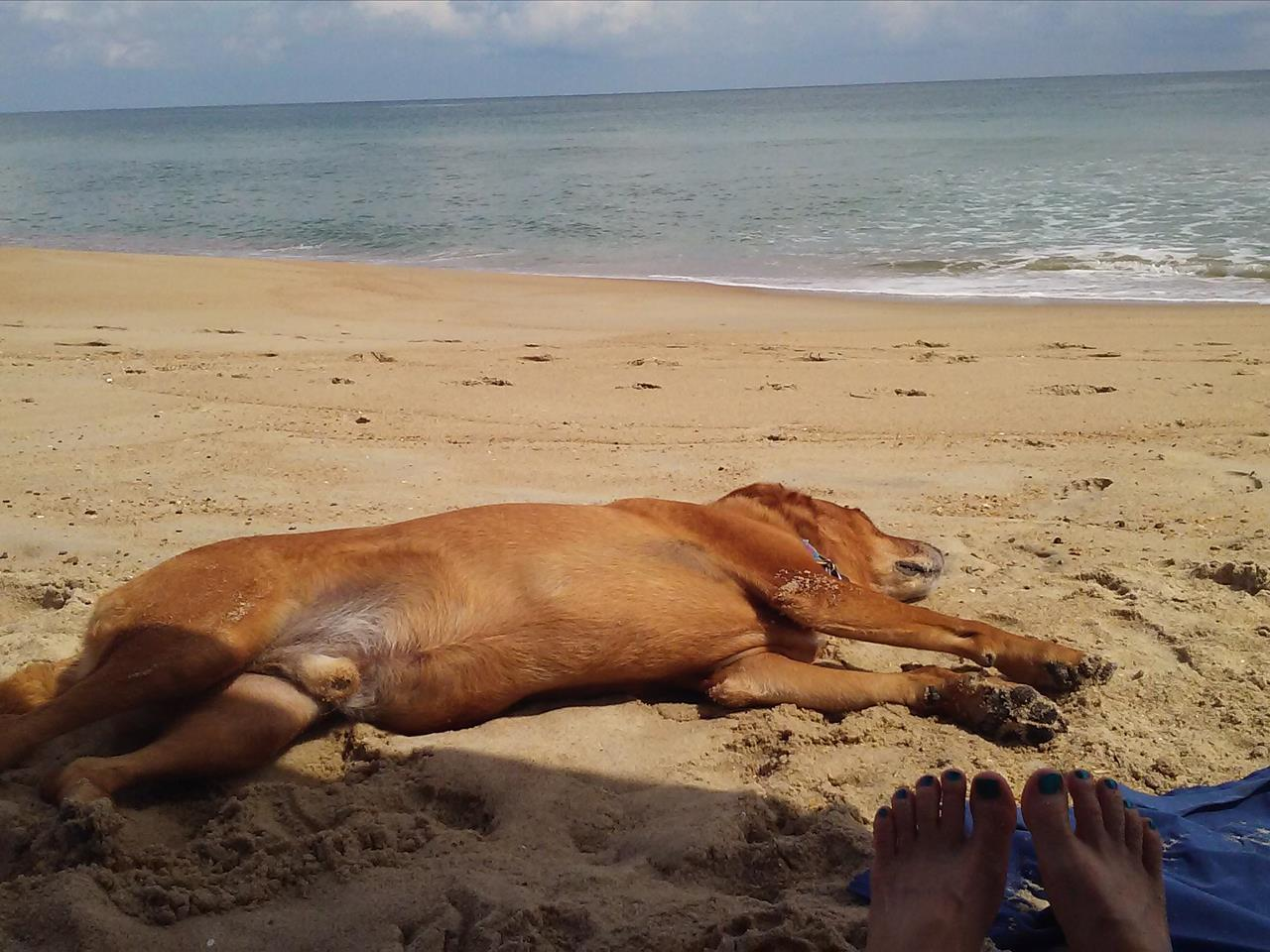 September 2015 Stay - JR16 - Beachcomber, Brenda Kijesky